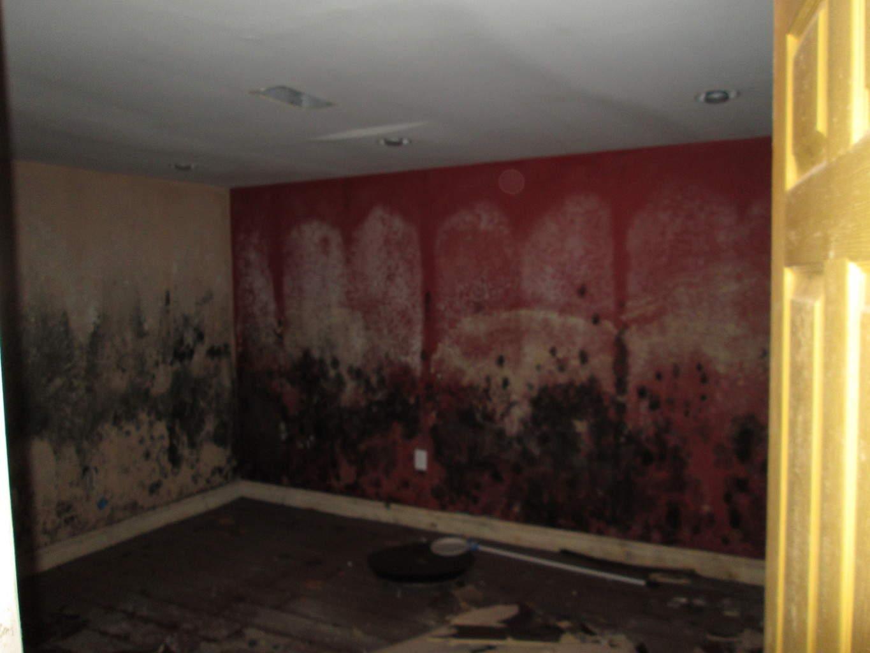 black mold restoration philadelphia pa elite water damage
