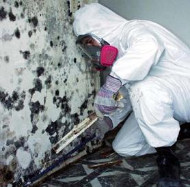 mold-worker-photo